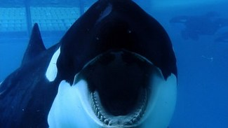 photo for Blackfish